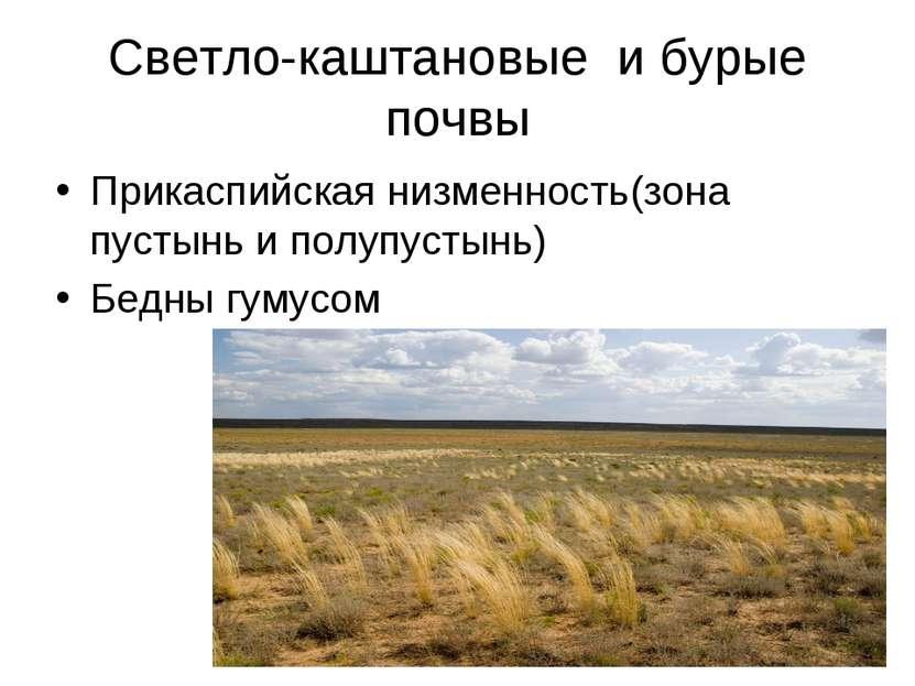 Светло-каштановые и бурые почвы Прикаспийская низменность(зона пустынь и полу...