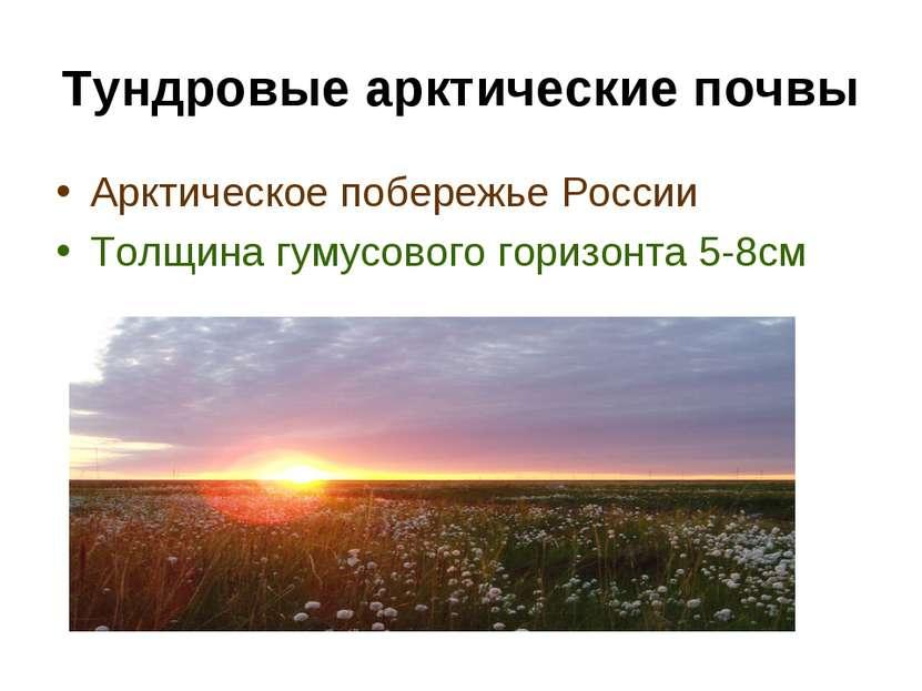 Тундровые арктические почвы Арктическое побережье России Толщина гумусового г...