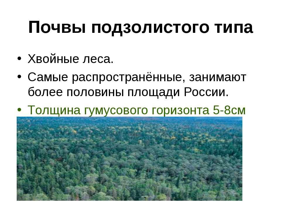 Почвы подзолистого типа Хвойные леса. Самые распространённые, занимают более ...