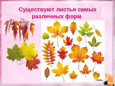 Существуют листья самых различных форм