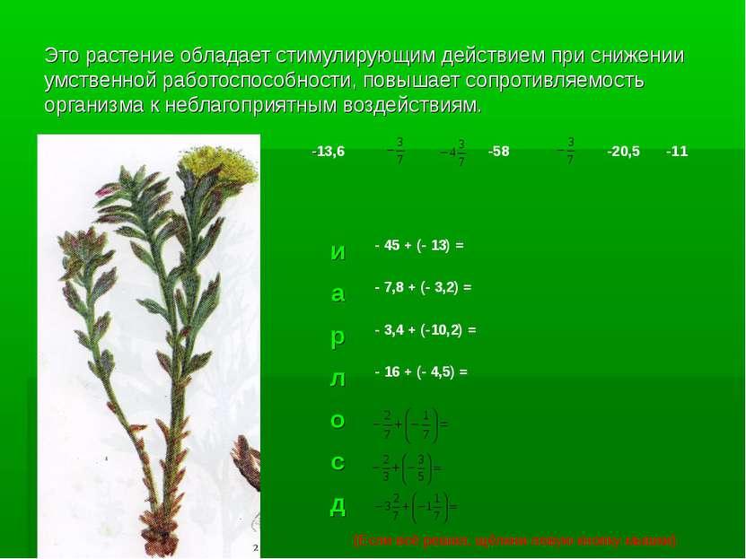 Это растение обладает стимулирующим действием при снижении умственной работос...