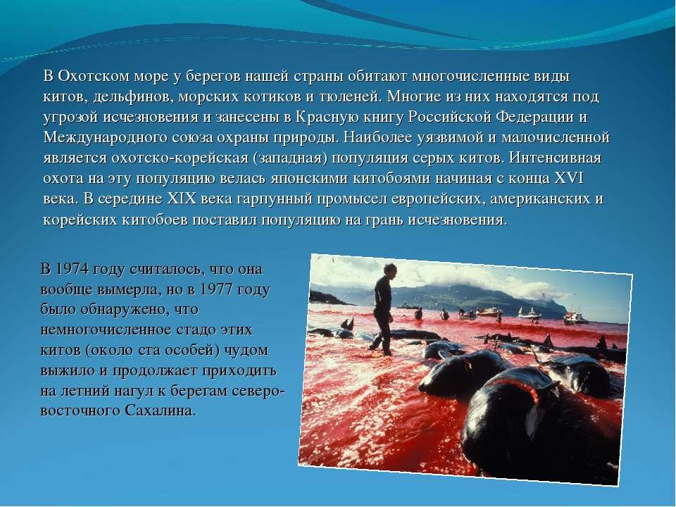 В Охотском море у берегов нашей страны обитают многочисленные виды китов, дел...