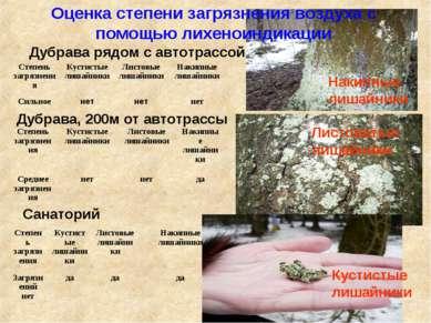 Оценка степени загрязнения воздуха с помощью лихеноиндикации Дубрава рядом с ...