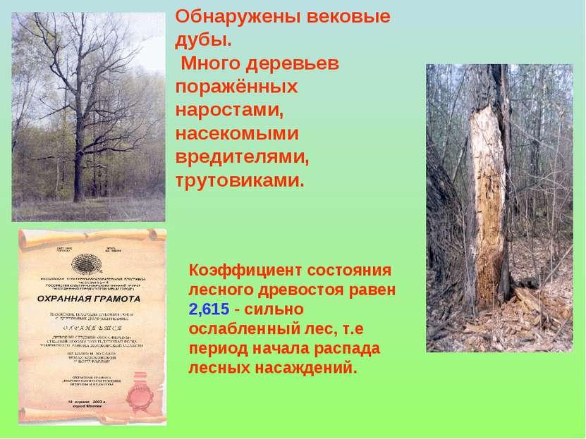 Обнаружены вековые дубы. Много деревьев поражённых наростами, насекомыми вред...