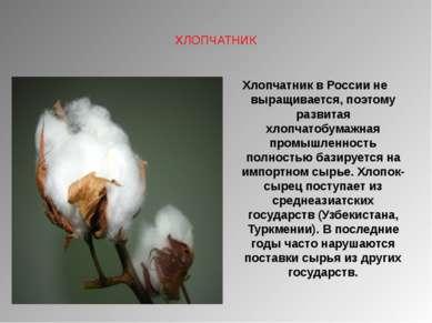 ХЛОПЧАТНИК Хлопчатник в России не выращивается, поэтому развитая хлопчатобума...