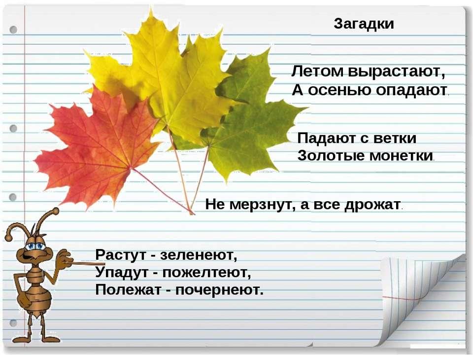 Загадки Летом вырастают, А осенью опадают. Падают с ветки Золотые монетки. Ра...