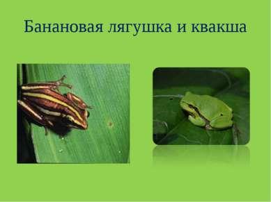 Банановая лягушка и квакша