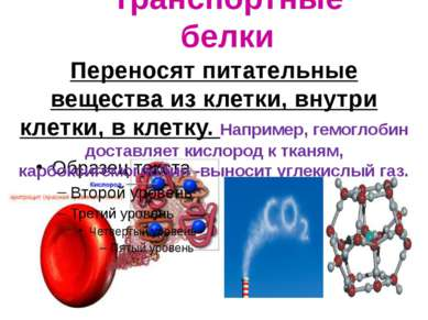 Транспортные белки . Переносят питательные вещества из клетки, внутри клетки,...