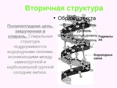 Вторичная структура Полипептидная цепь, закрученная в спираль. Спиральная стр...
