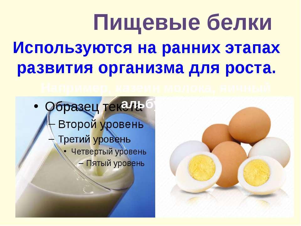 Пищевые белки . Используются на ранних этапах развития организма для роста. Н...