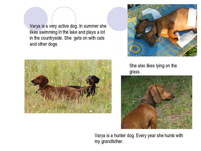 Varya is a very active dog. In summer she likes swimming in the lake and play...