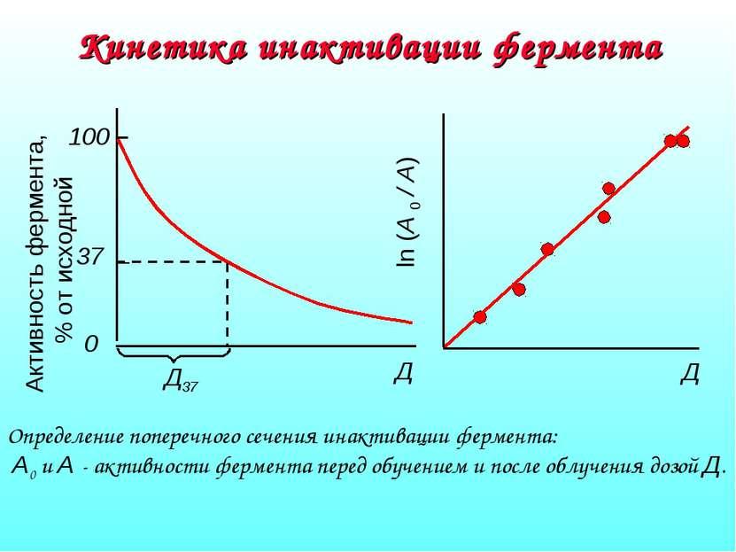 Кинетика инактивации фермента Определение поперечного сечения инактивации фер...