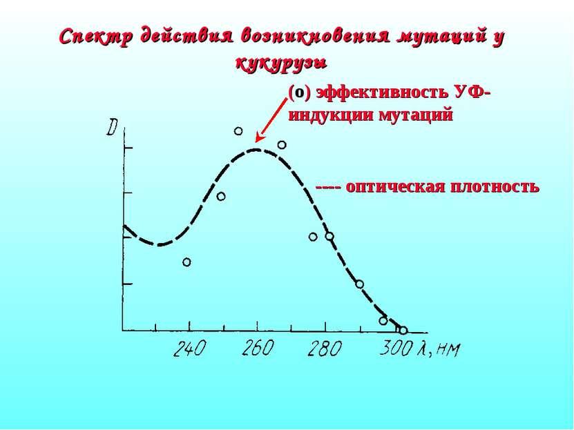Спектр действия возникновения мутаций у кукурузы ---- оптическая плотность (о...