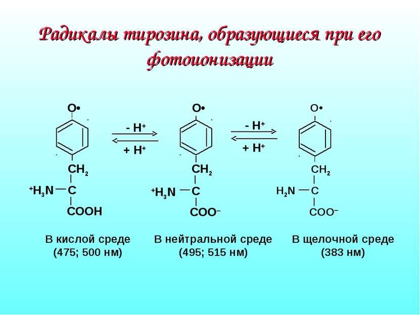 Радикалы тирозина, образующиеся при его фотоионизации