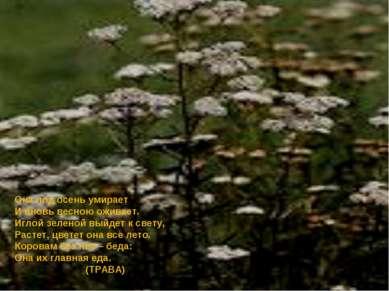 Она под осень умирает И вновь весною оживает. Иглой зеленой выйдет к свету, Р...