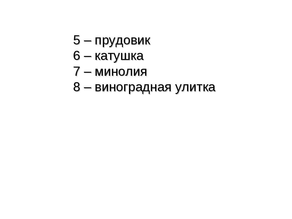 5 – прудовик 6 – катушка 7 – минолия 8 – виноградная улитка
