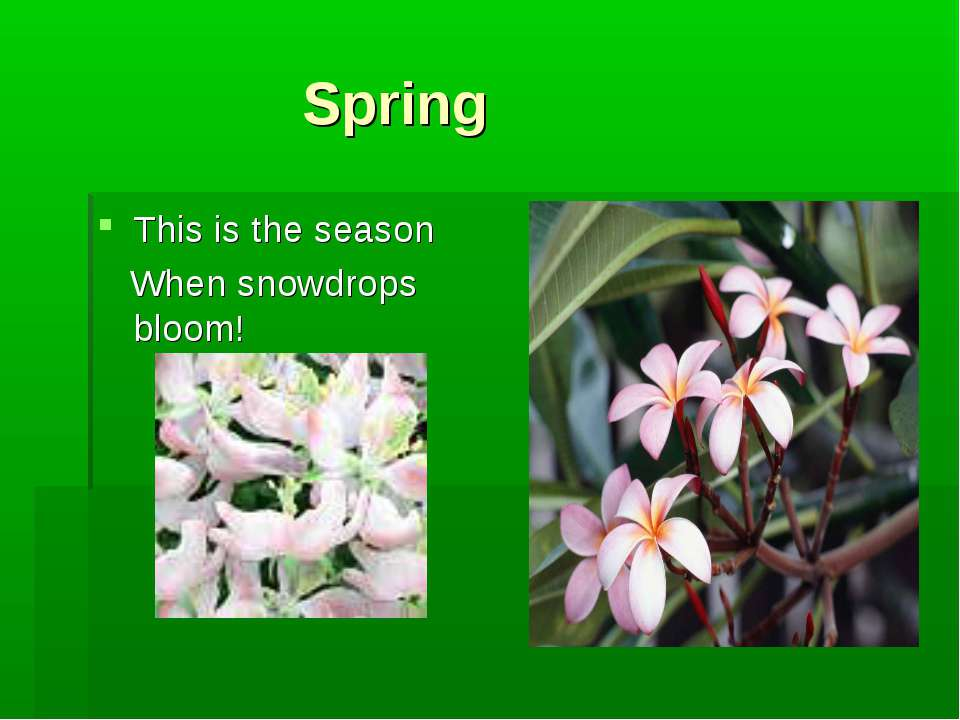 Spring This is the season When snowdrops bloom!