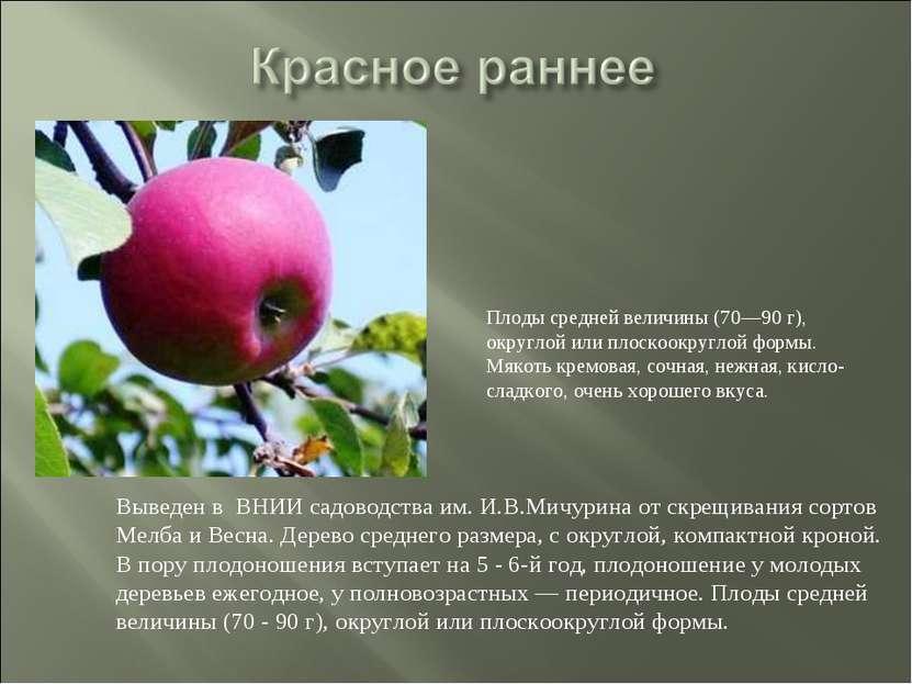 Выведен в ВНИИ садоводства им. И.В.Мичурина от скрещивания сортов Мелба и Вес...