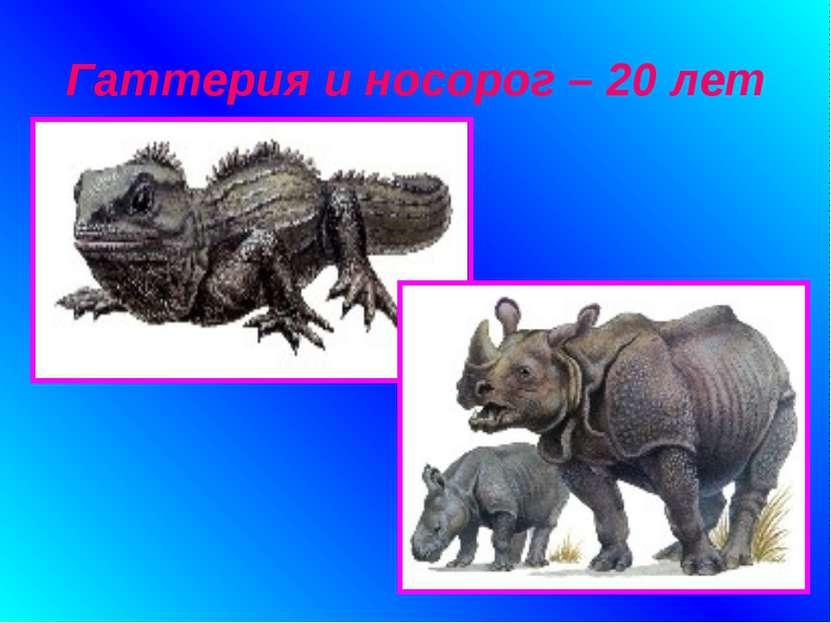 Гаттерия и носорог – 20 лет