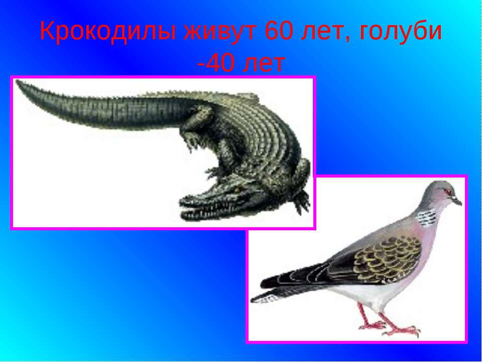Крокодилы живут 60 лет, голуби -40 лет
