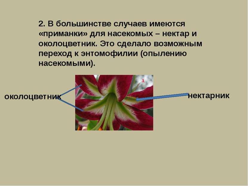 2. В большинстве случаев имеются «приманки» для насекомых – нектар и околоцве...