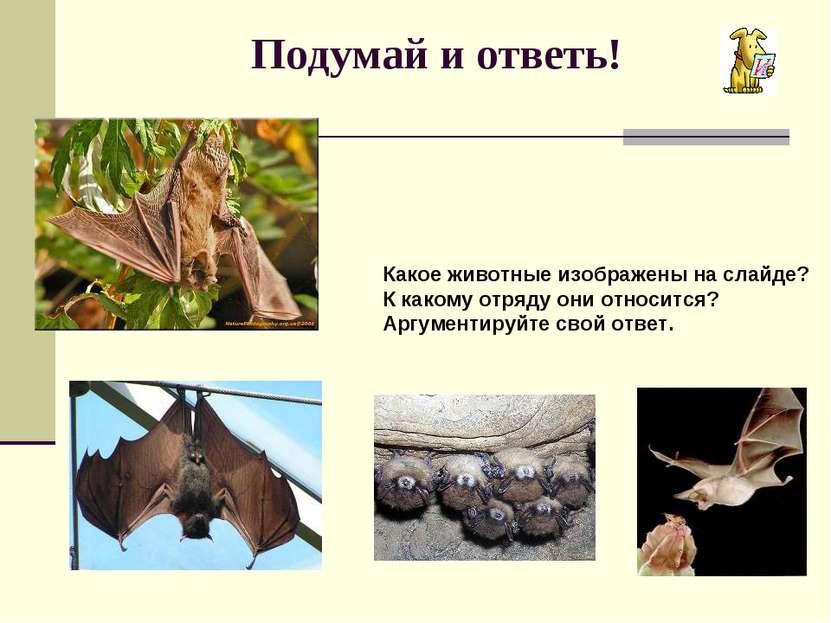 Подумай и ответь! Какое животные изображены на слайде? К какому отряду они от...