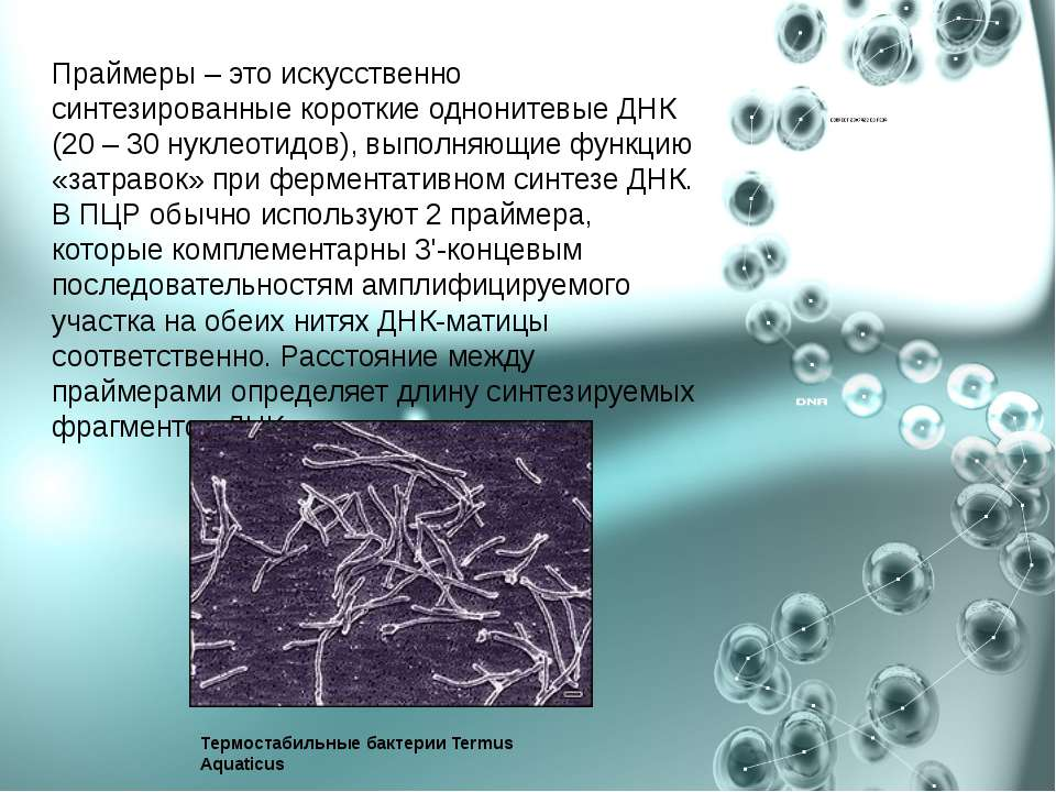 Праймеры – это искусственно синтезированные короткие однонитевые ДНК (20 – 30...