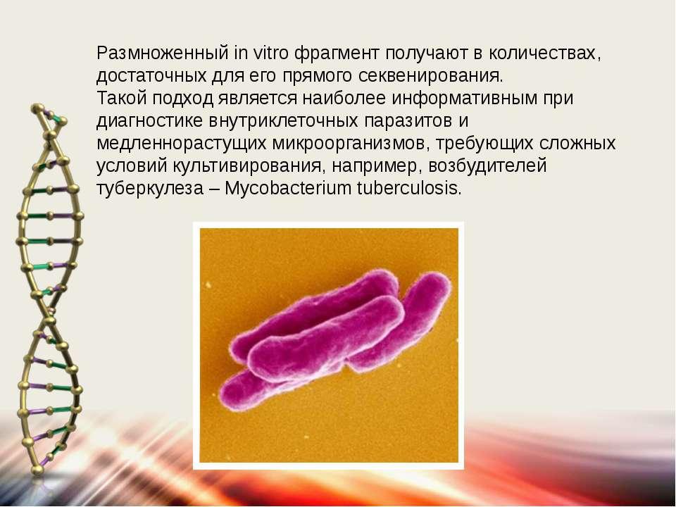 Размноженный in vitro фрагмент получают в количествах, достаточных для его пр...