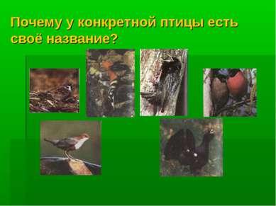 Почему у конкретной птицы есть своё название?