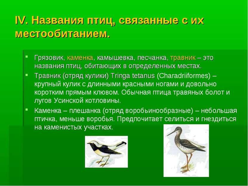IV. Названия птиц, связанные с их местообитанием. Грязовик, каменка, камышевк...