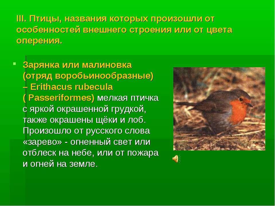 III. Птицы, названия которых произошли от особенностей внешнего строения или ...