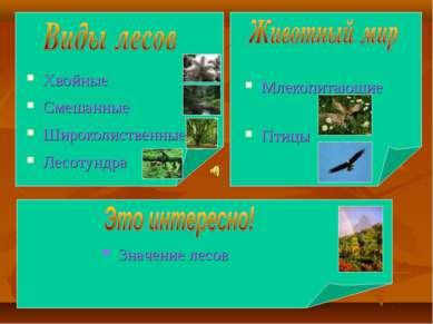 Хвойные Смешанные Широколиственные Лесотундра Млекопитающие Птицы Значение лесов
