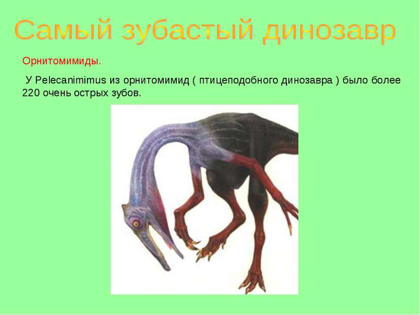 Орнитомимиды. У Pelecanimimus из орнитомимид ( птицеподобного динозавра ) был...