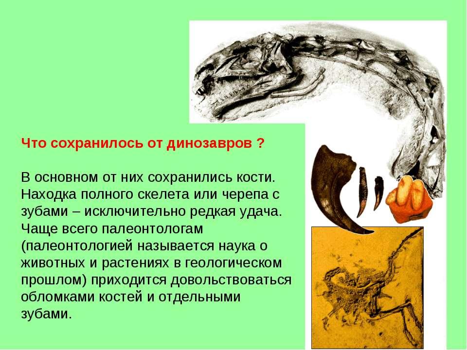 Что сохранилось от динозавров ? В основном от них сохранились кости. Находка ...