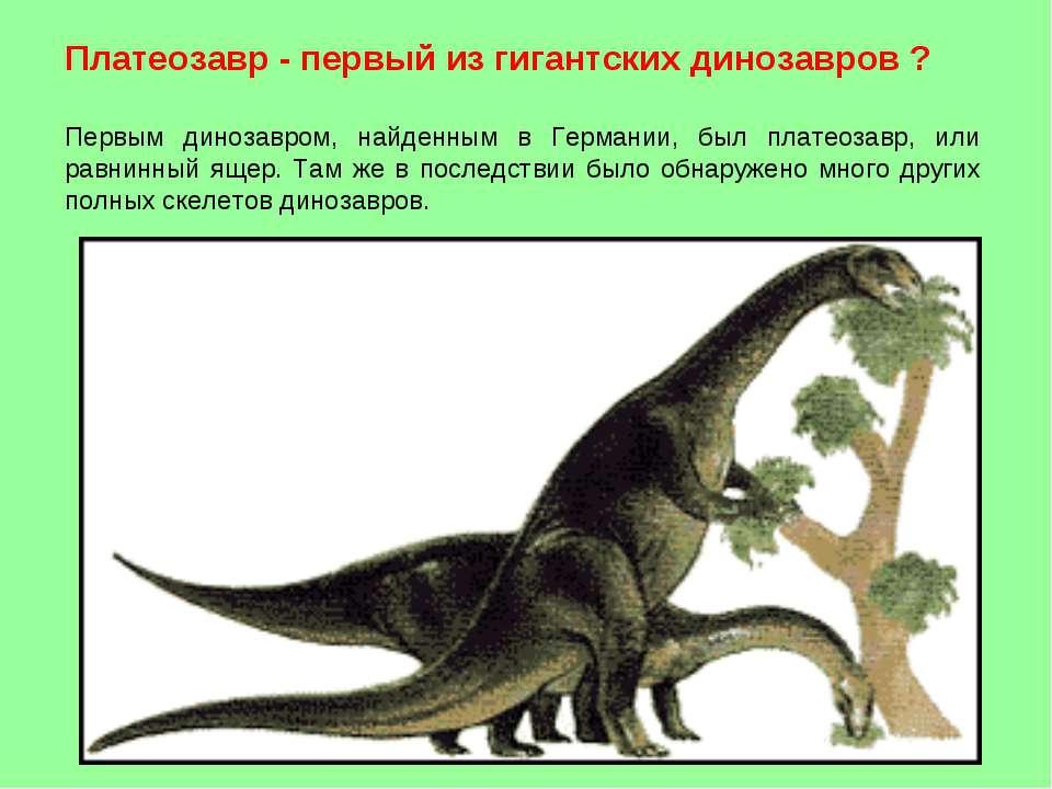 Платеозавр - первый из гигантских динозавров ? Первым динозавром, найденным в...