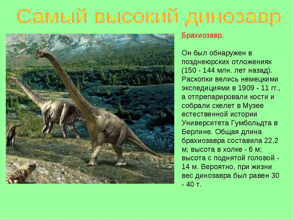 Брахиозавр. Он был обнаружен в позднеюрских отложениях (150 - 144 млн. лет на...