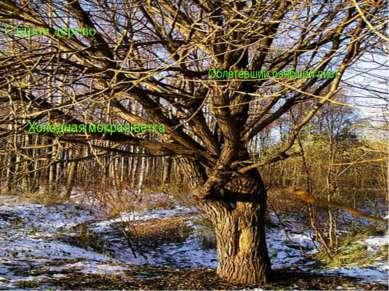 Старое дерево Холодная мокрая ветка Облетевший озябший лист