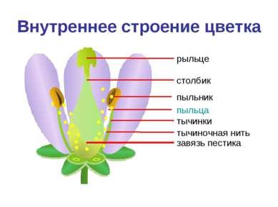 Внутреннее строение цветка