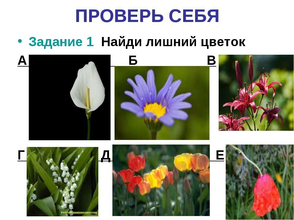 ПРОВЕРЬ СЕБЯ Задание 1 Найди лишний цветок А Б В Г Д Е