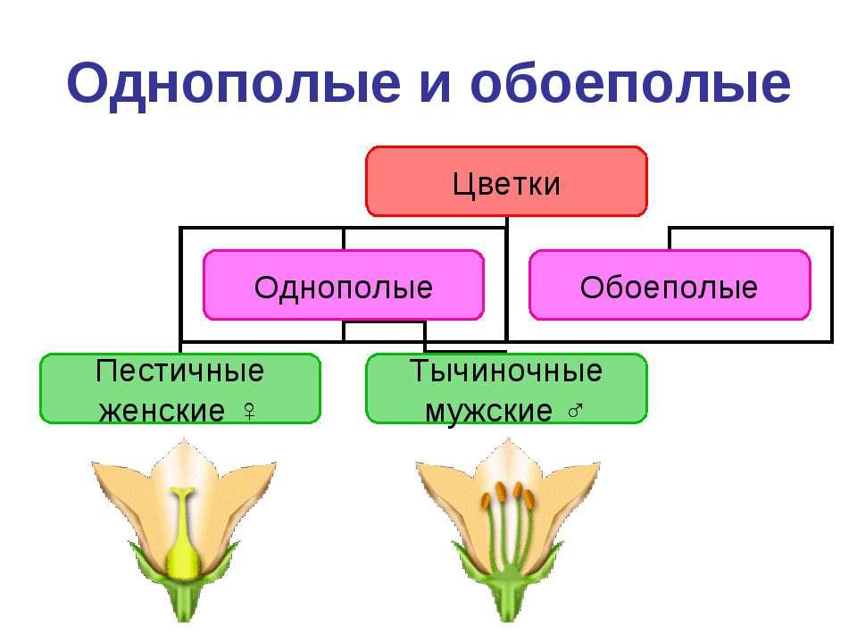 Однополые и обоеполые
