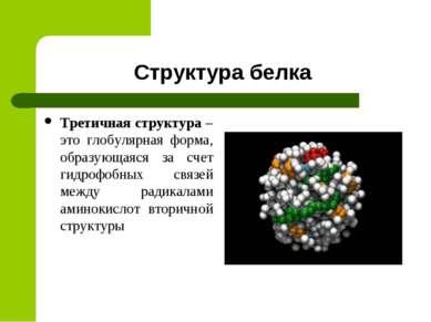 Структура белка Третичная структура – это глобулярная форма, образующаяся за ...