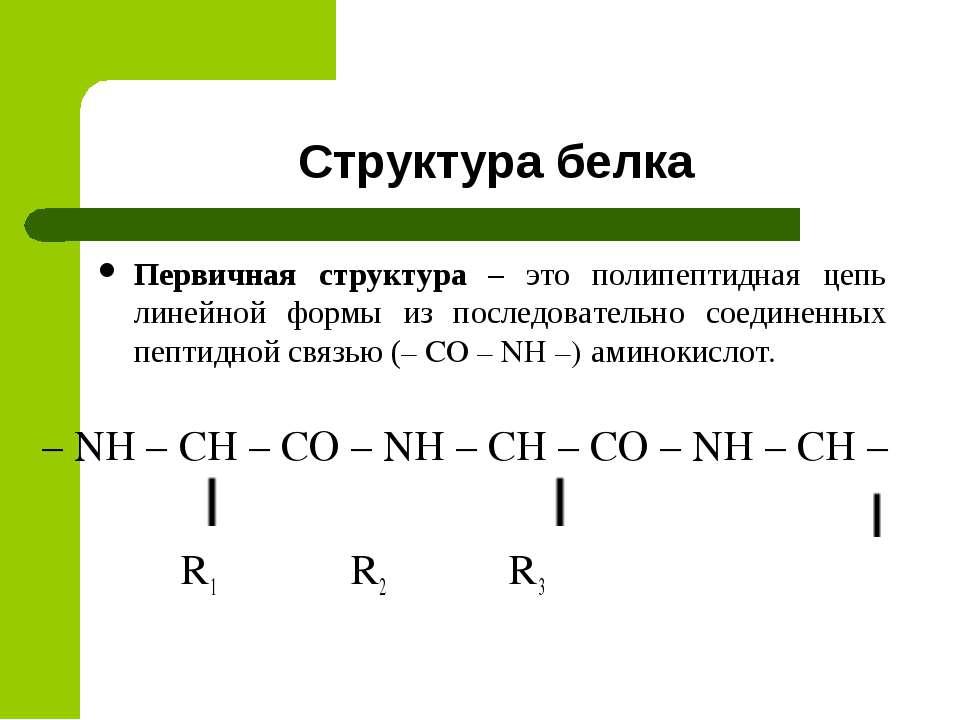 Структура белка Первичная структура – это полипептидная цепь линейной формы и...