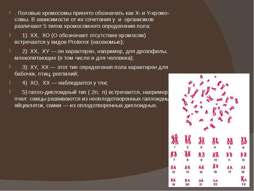 . Половые хромосомы принято обозначать как Х- и Y-хромо-сомы. В зависимости о...