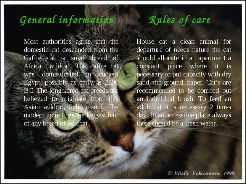 General information Most authorities agree that the domestic cat descended fr...
