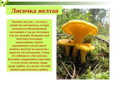 Лисичка желтая Лисичка желтая – состоит в семействе лисичковых, в миру называ...