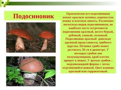 Подосиновик Практически все подосиновики имеют красную шляпку, коренастую нож...