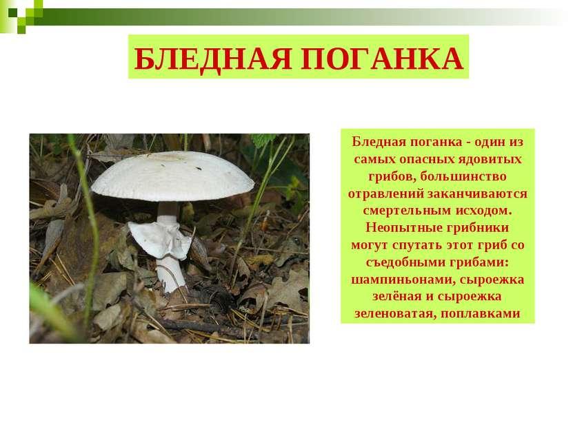 БЛЕДНАЯ ПОГАНКА Бледная поганка - один из самых опасных ядовитых грибов, боль...
