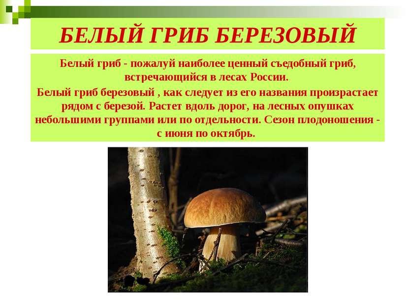 Белый гриб - пожалуй наиболее ценный съедобный гриб, встречающийся в лесах Ро...