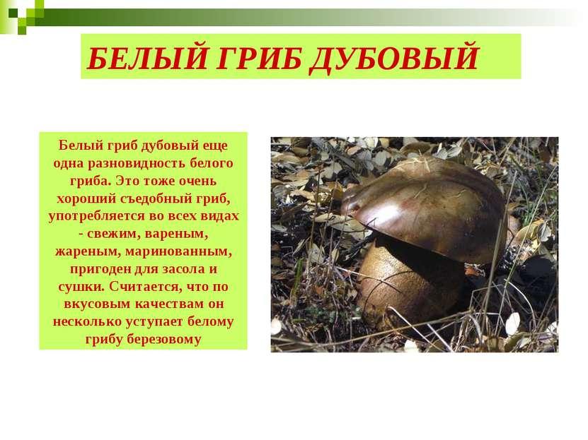 БЕЛЫЙ ГРИБ ДУБОВЫЙ Белый гриб дубовый еще одна разновидность белого гриба. Эт...