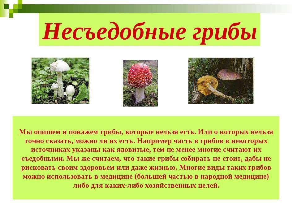 Несъедобные грибы Мы опишем и покажем грибы, которые нельзя есть. Или о котор...
